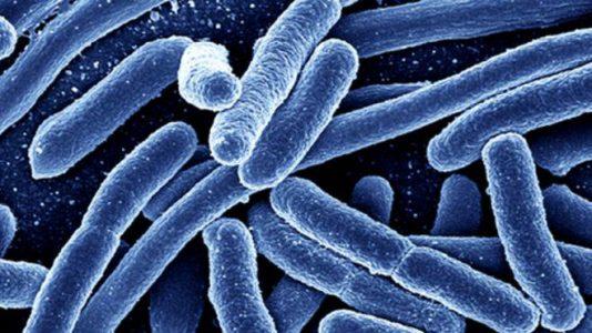 باکتری های موجود در آب های تصفیه نشده